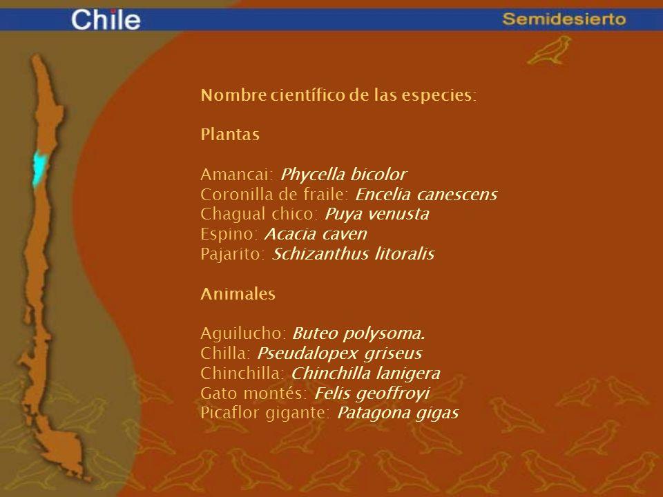 Nombre científico de las especies: Plantas Amancai: Phycella bicolor Coronilla de fraile: Encelia canescens Chagual chico: Puya venusta Espino: Acacia