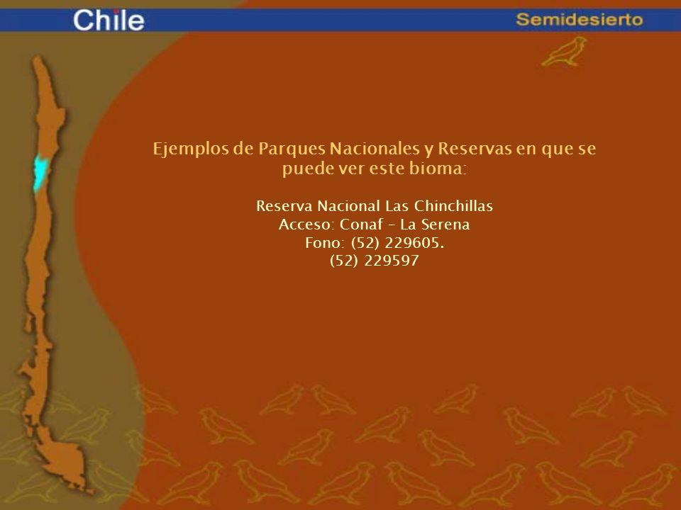 Ejemplos de Parques Nacionales y Reservas en que se puede ver este bioma: Reserva Nacional Las Chinchillas Acceso: Conaf – La Serena Fono: (52) 229605