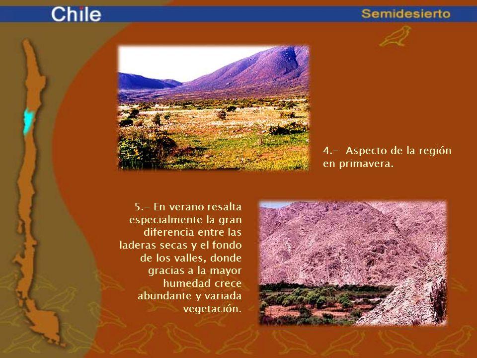 4.- Aspecto de la región en primavera. 5.- En verano resalta especialmente la gran diferencia entre las laderas secas y el fondo de los valles, donde