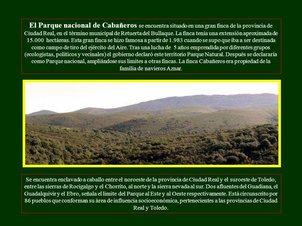 El Parque nacional de Cabañeros se encuentra situado en una gran finca de la provincia de Ciudad Real, en el término municipal de Retuerta del Bullaque.