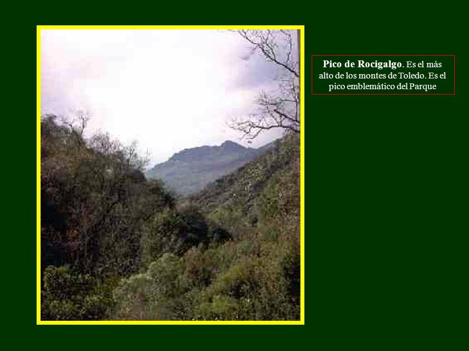 Pico de Rocigalgo. Es el más alto de los montes de Toledo. Es el pico emblemático del Parque