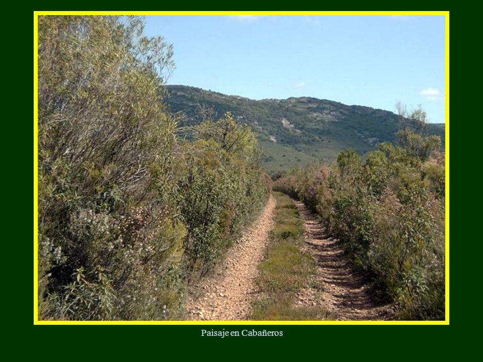 Valle alcornocal El Alcornocal : Esta formación está muy ligada al Encinar; se encuentra en orientaciones habitualmente más cálidas y húmedas y en ocasiones formando bosques mixtos, con Encinas y Quejigos, alcanzando algunos ejemplares los 15 metros de altura.
