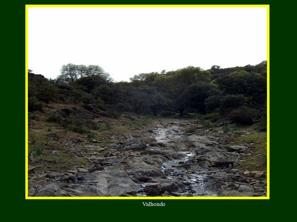 Laguna de los cuatro morros (por los cuatro cerros) Galápago europeo Anfibios Tritón jaspeado Sapillo pintojo
