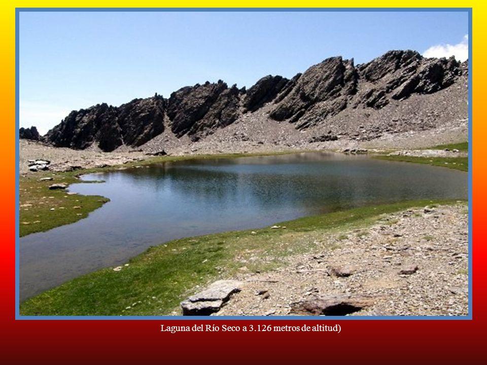 Laguna de Bolaños o tajos altos (2.900 metros de altitud) Durante la Glaciación de Würm, el limite de las nieves perpetuas de Sierra Nevada se situaba
