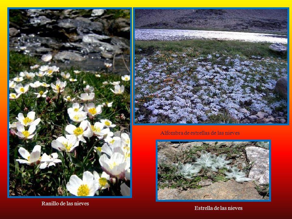 ParnasiapalustrisCalystegiasepium GentiananeumonantheLinariaglacialisPinguicolanevadensis Scirpusholoschoenus Scutellariagaleniculata