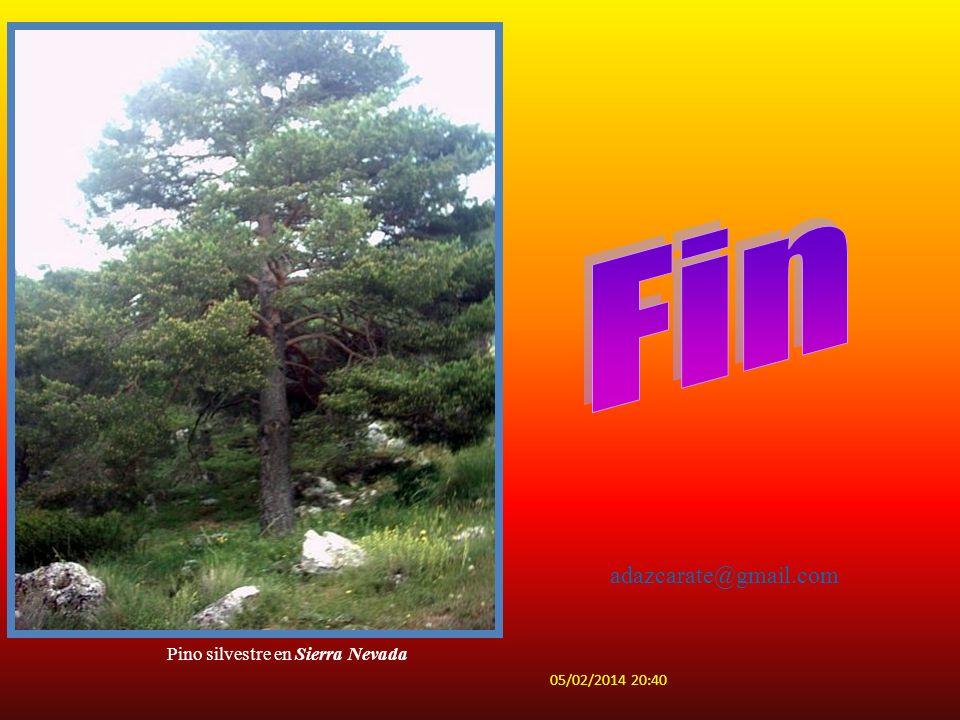 Anades reales Fulicaatral Tachybaptusruficol BaeticaustulataEumigusrubioi Sympetrumsaguineum