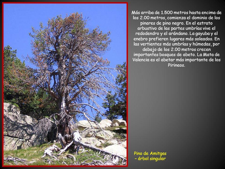 En las partes bajas de los valles, en el piso montano, hasta unos 1.500 metros, se encuentran mayoritariamente bosques caducifolios con roble pubescen