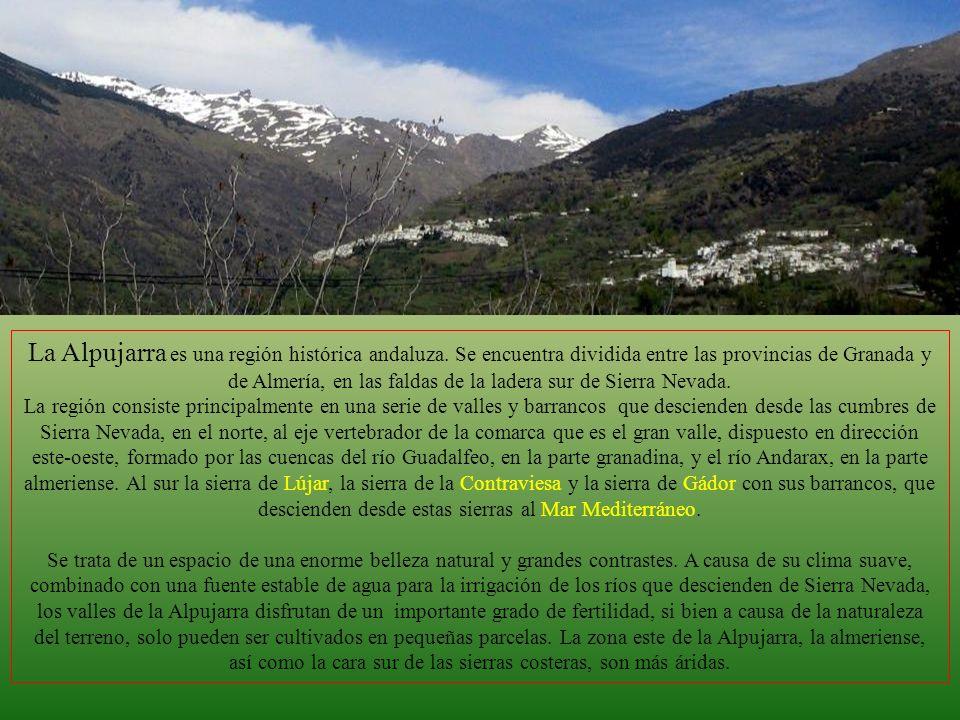 Fotografía y Documentación: Internet Granada Paco de Lucia