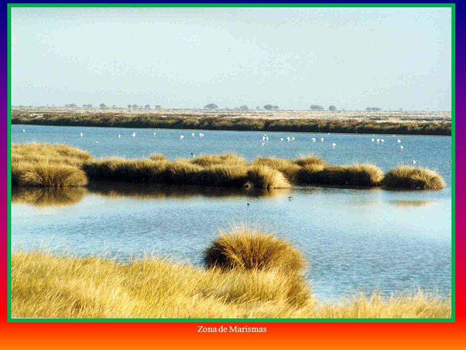 Doñana desde el Guadalquivir