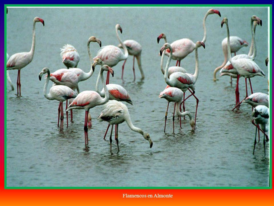En cuanto a las especies animales, se encuentran catalogadas 20 especies de peces de agua dulce, 11 de anfibios, 21 de reptiles, 37 de mamíferos no marinos y 360 aves, de las que 127 se reproducen habitualmente en el Parque.
