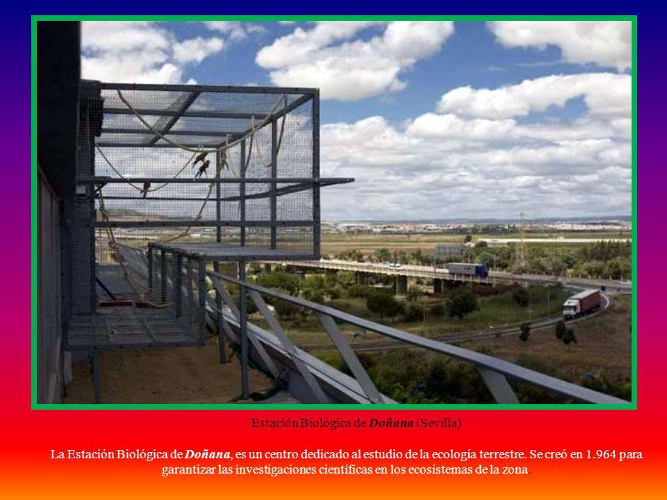 Flora en Doñana Alcornoque Camarinas Mirto Narciso