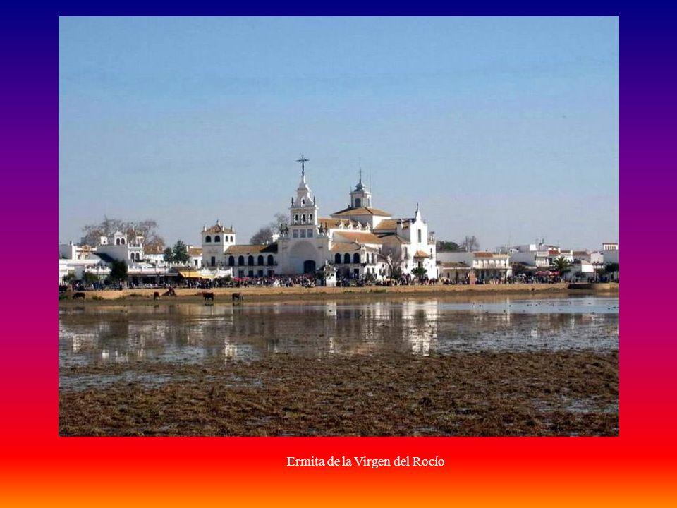La Romería del Rocío y su relación con el Coto: El término municipal de Almonte (Huelva) y por ende el Parque, se encuentra enclavado en una zona en la que las manifestaciones religiosas han sido frecuentes a lo largo de los siglos.
