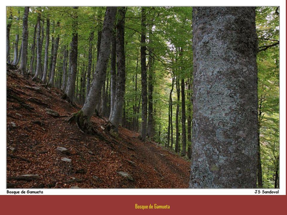 Al borde del Bosque de Gamueta