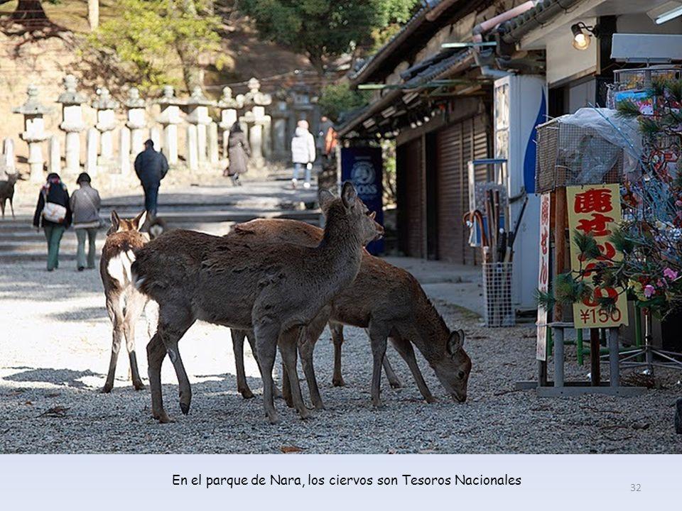 Parque de Nara 31