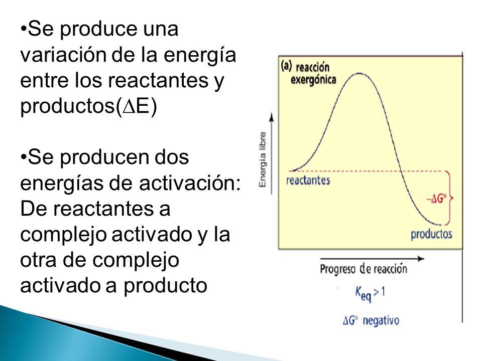 Se produce una variación de la energía entre los reactantes y productos( E) Se producen dos energías de activación: De reactantes a complejo activado