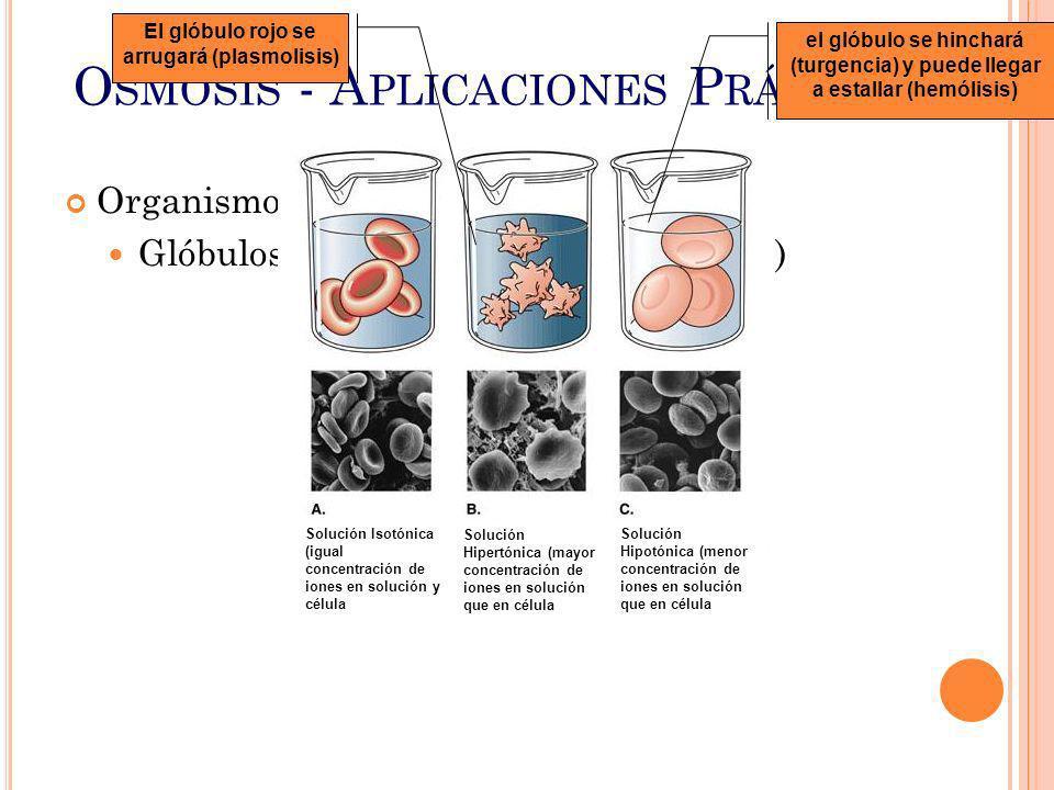 O SMOSIS - A PLICACIONES P RÁCTICAS Organismos Vivos Glóbulos rojos de la sangre (Hematíes) Solución Isotónica (igual concentración de iones en soluci