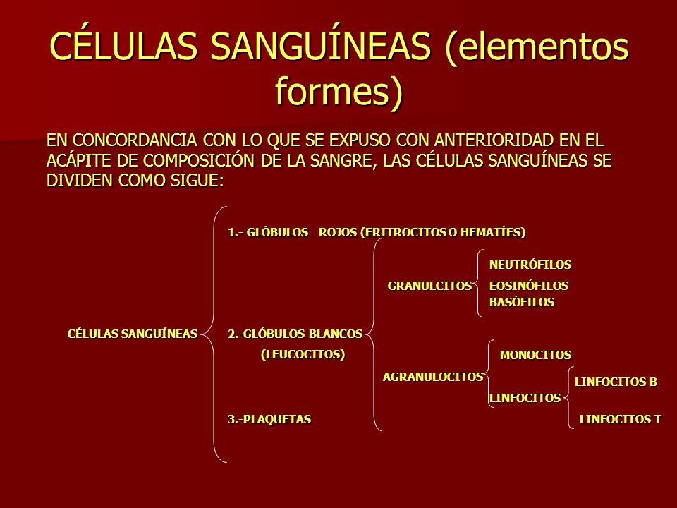 CÉLULAS SANGUÍNEAS (elementos formes) EN CONCORDANCIA CON LO QUE SE EXPUSO CON ANTERIORIDAD EN EL ACÁPITE DE COMPOSICIÓN DE LA SANGRE, LAS CÉLULAS SAN