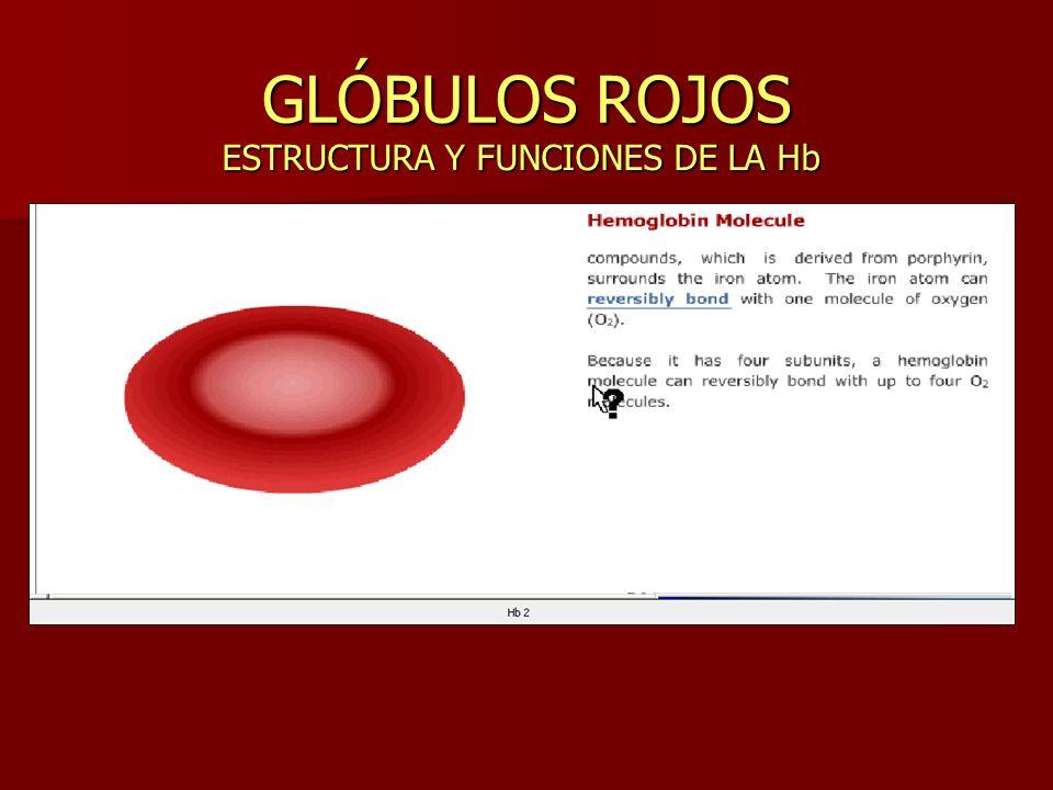 GLÓBULOS ROJOS ESTRUCTURA Y FUNCIONES DE LA Hb