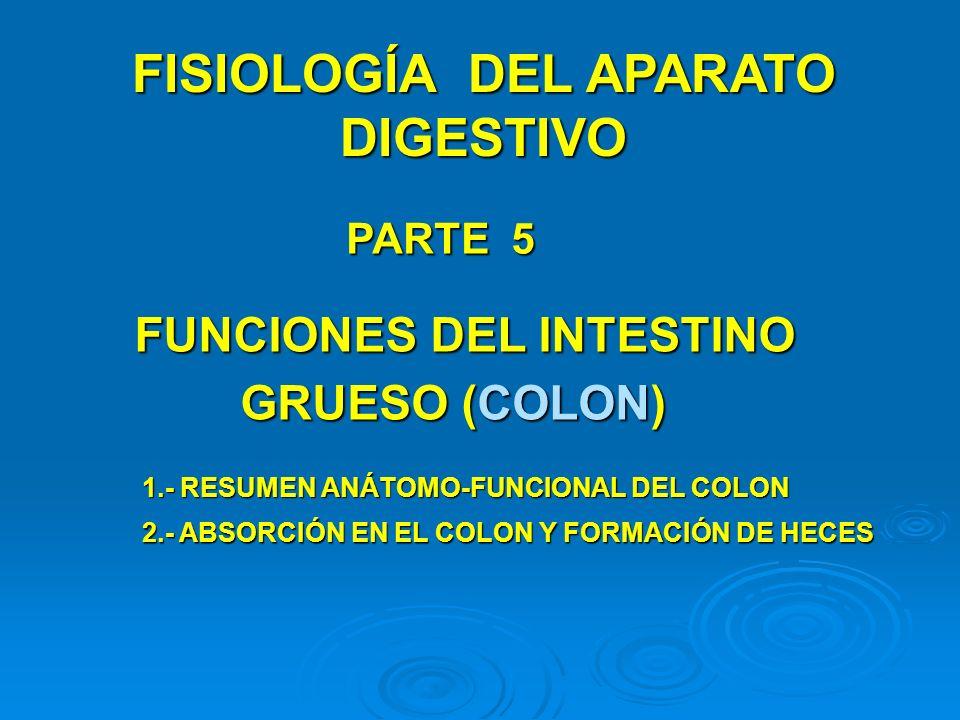 FISIOLOGÍA DEL APARATO DIGESTIVO PARTE 5 FUNCIONES DEL INTESTINO GRUESO (COLON) 1.- RESUMEN ANÁTOMO-FUNCIONAL DEL COLON 2.- ABSORCIÓN EN EL COLON Y FO