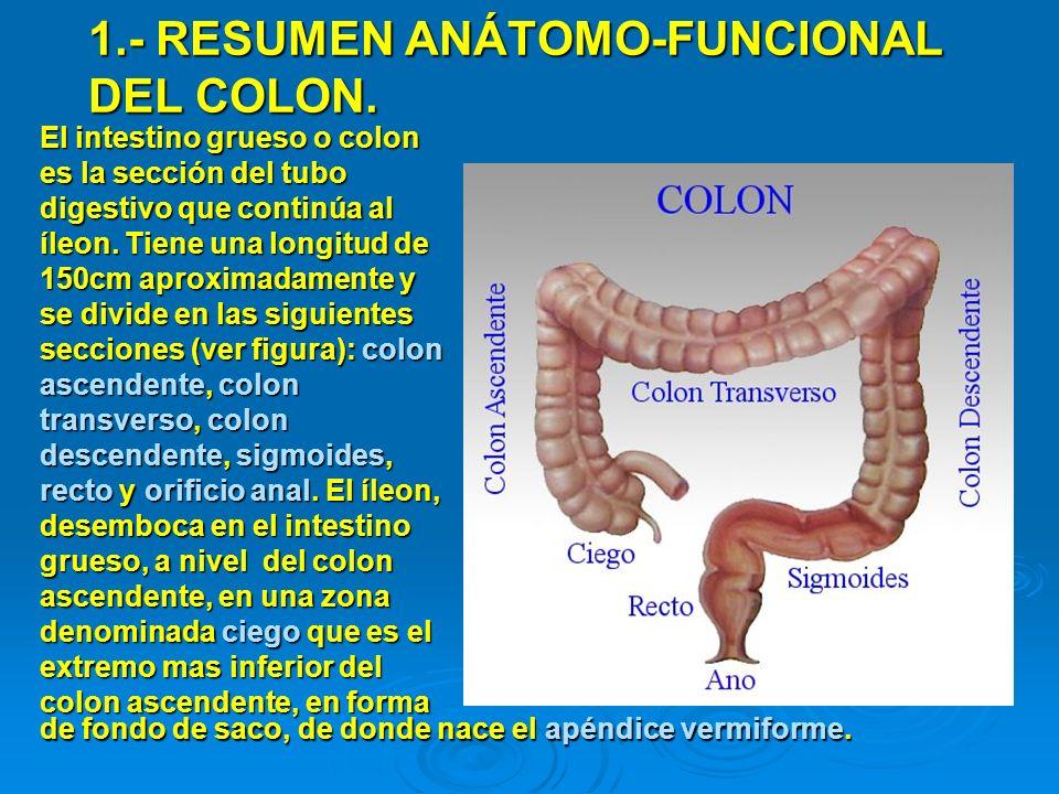 1.- RESUMEN ANÁTOMO-FUNCIONAL DEL COLON. El intestino grueso o colon es la sección del tubo digestivo que continúa al íleon. Tiene una longitud de 150