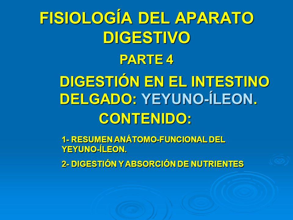 MECANISMOS BÁSICOS DE ABSORCIÓN La absorción a través de la mucosa intestinal se produce mediante un mecanismo denominado TRANSPORTE ACTIVO y por DIFUSIÓN.