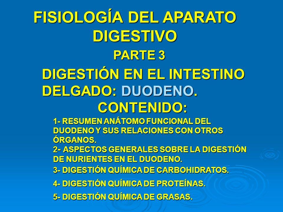FISIOLOGÍA DEL APARATO DIGESTIVO PARTE 3 DIGESTIÓN EN EL INTESTINO DELGADO: DUODENO. CONTENIDO: 1- RESUMEN ANÁTOMO FUNCIONAL DEL DUODENO Y SUS RELACIO