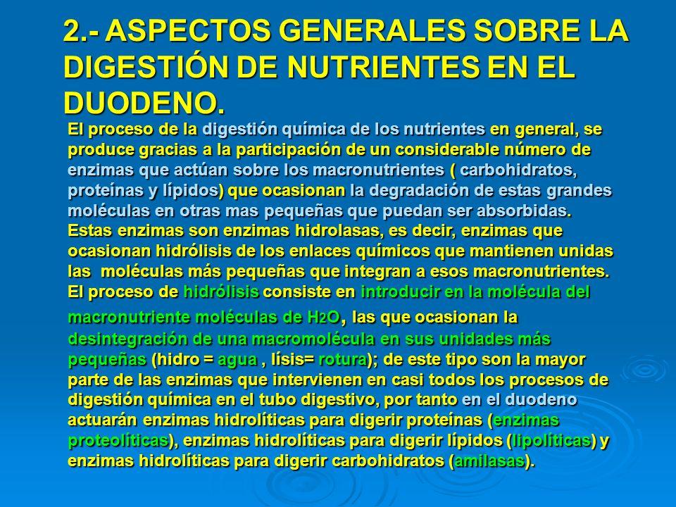 2.- ASPECTOS GENERALES SOBRE LA DIGESTIÓN DE NUTRIENTES EN EL DUODENO. El proceso de la digestión química de los nutrientes en general, se produce gra