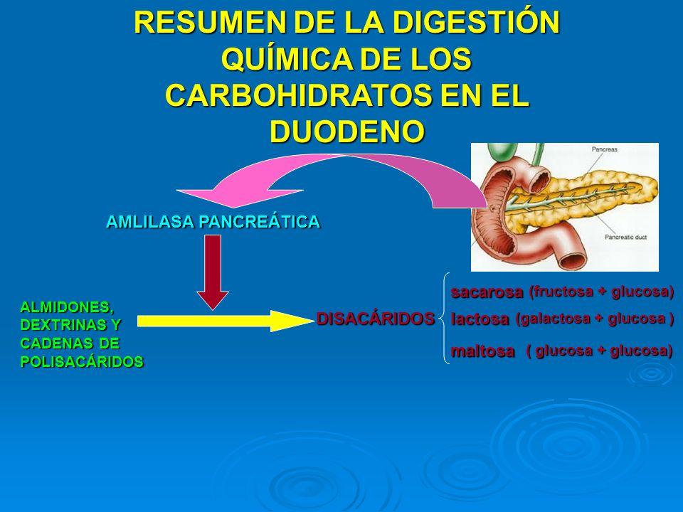 RESUMEN DE LA DIGESTIÓN QUÍMICA DE LOS CARBOHIDRATOS EN EL DUODENO ALMIDONES, DEXTRINAS Y CADENAS DE POLISACÁRIDOS AMLILASA PANCREÁTICA DISACÁRIDOS sa