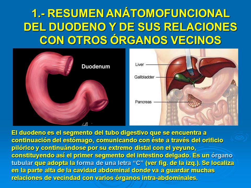 1.- RESUMEN ANÁTOMOFUNCIONAL DEL DUODENO Y DE SUS RELACIONES CON OTROS ÓRGANOS VECINOS El duodeno es el segmento del tubo digestivo que se encuentra a