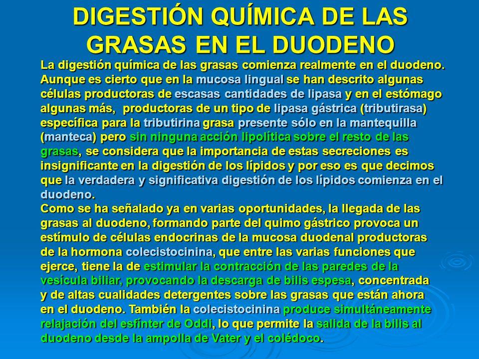 DIGESTIÓN QUÍMICA DE LAS GRASAS EN EL DUODENO La digestión química de las grasas comienza realmente en el duodeno. Aunque es cierto que en la mucosa l