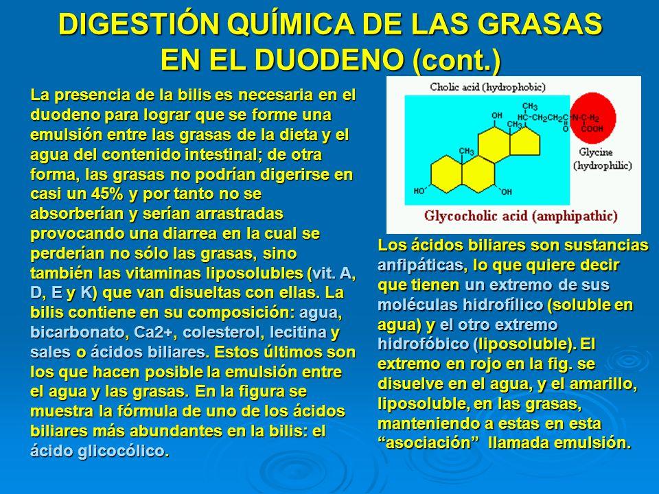 DIGESTIÓN QUÍMICA DE LAS GRASAS EN EL DUODENO (cont.) La presencia de la bilis es necesaria en el duodeno para lograr que se forme una emulsión entre