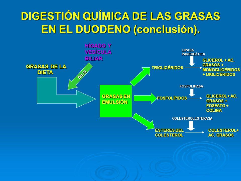DIGESTIÓN QUÍMICA DE LAS GRASAS EN EL DUODENO (conclusión). GRASAS DE LA DIETA HÍGADO Y VESÍCULA BILIAR BILIS GRASAS EN EMULSIÓN TRIGLICÉRIDOS ÉSTERES