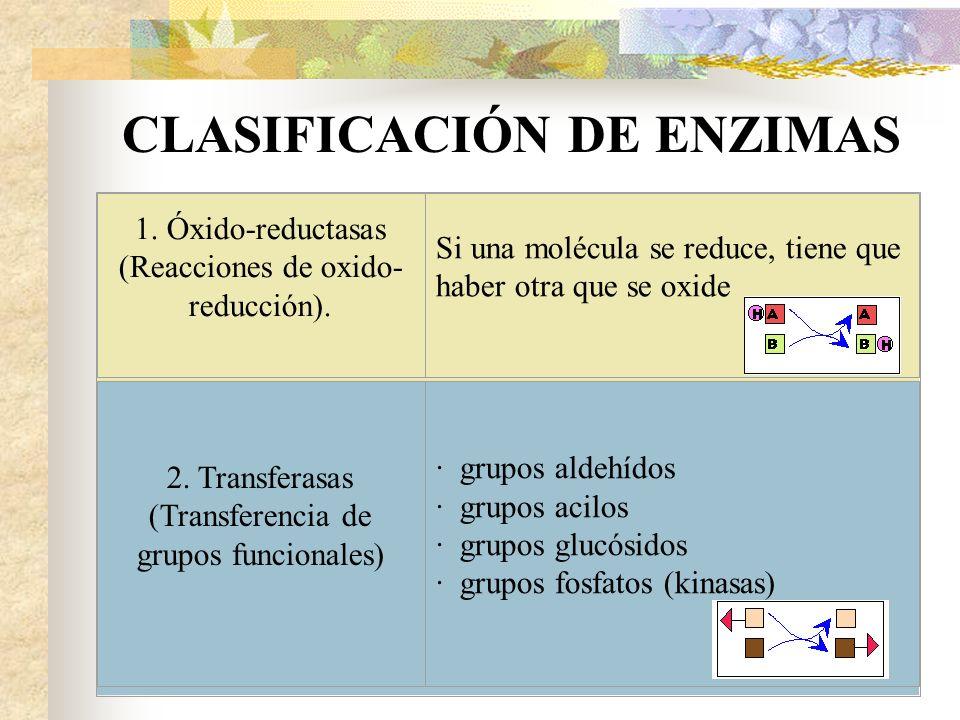 CLASIFICACIÓN DE ENZIMAS 1. Óxido-reductasas (Reacciones de oxido- reducción). Si una molécula se reduce, tiene que haber otra que se oxide 2. Transfe
