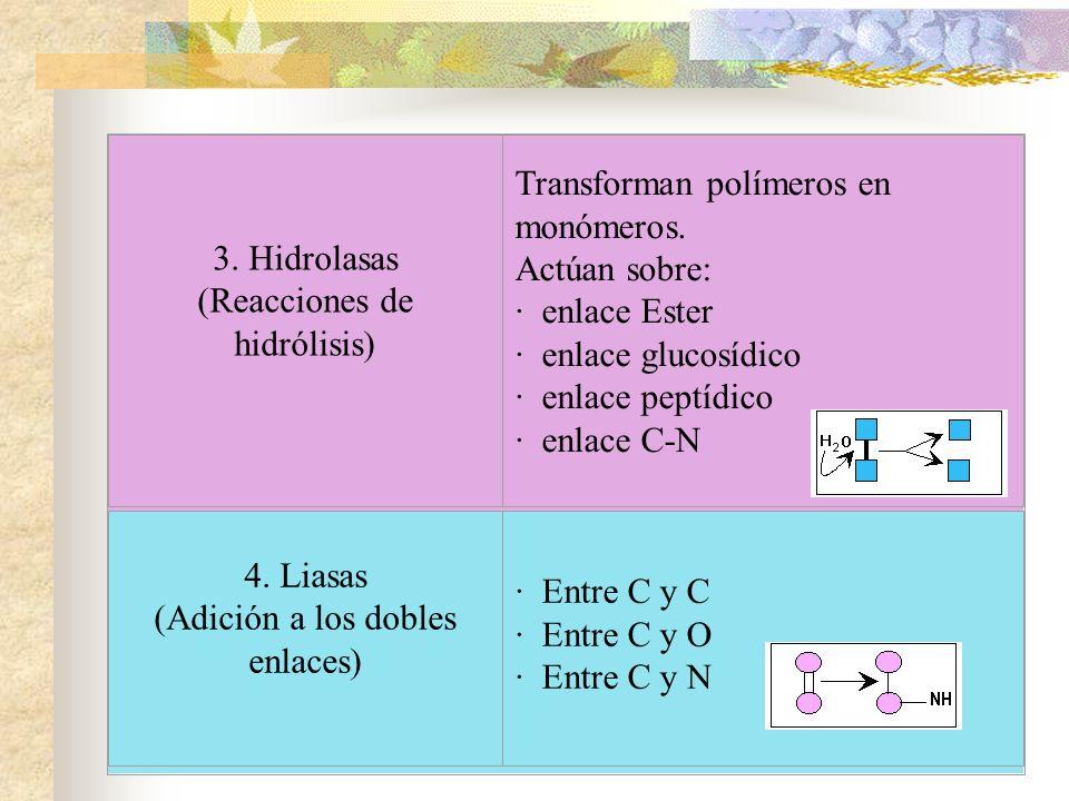 3. Hidrolasas (Reacciones de hidrólisis) Transforman polímeros en monómeros. Actúan sobre: · enlace Ester · enlace glucosídico · enlace peptídico · en