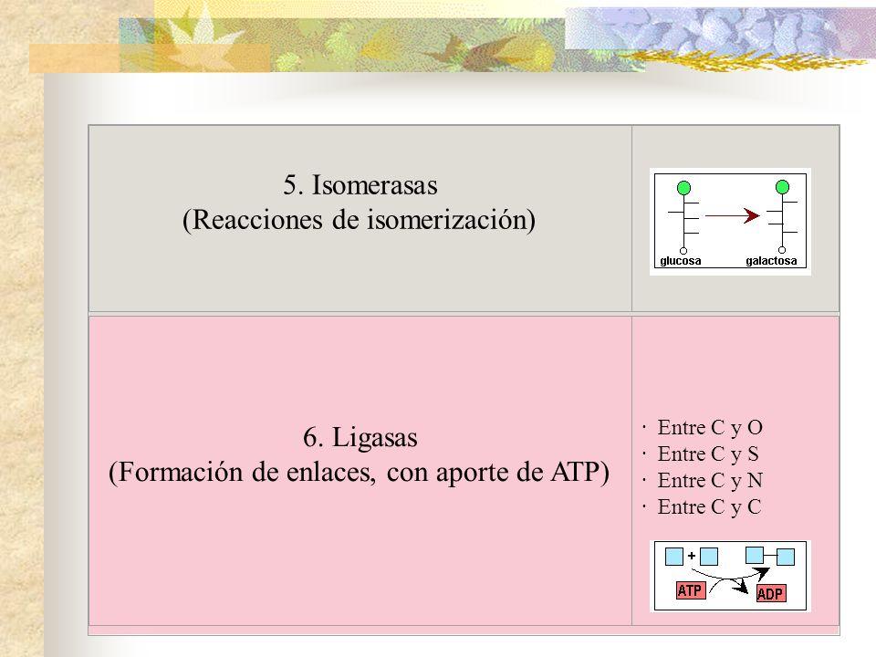 5. Isomerasas (Reacciones de isomerización) 6. Ligasas (Formación de enlaces, con aporte de ATP) · Entre C y O · Entre C y S · Entre C y N · Entre C y