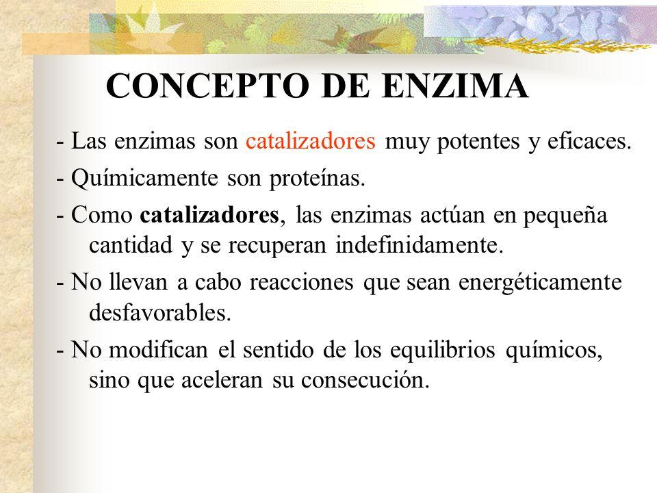 CONCEPTO DE ENZIMA - Las enzimas son catalizadores muy potentes y eficaces. - Químicamente son proteínas. - Como catalizadores, las enzimas actúan en