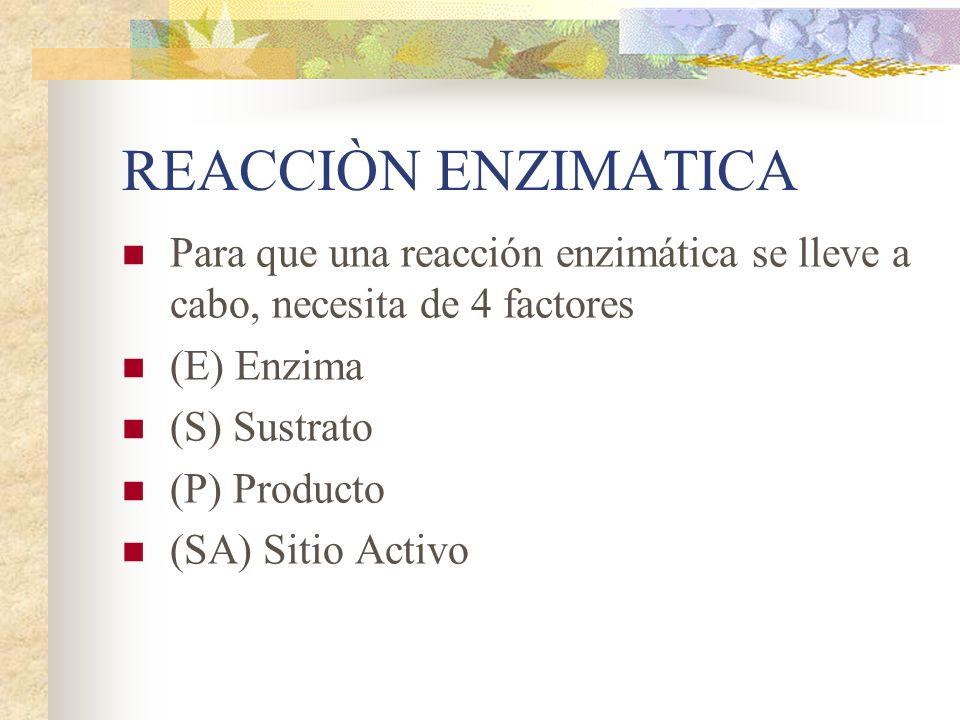 REACCIÒN ENZIMATICA Para que una reacción enzimática se lleve a cabo, necesita de 4 factores (E) Enzima (S) Sustrato (P) Producto (SA) Sitio Activo