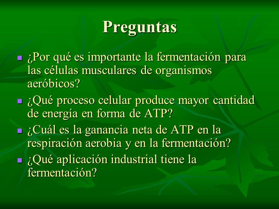 Preguntas ¿Por qué es importante la fermentación para las células musculares de organismos aeróbicos? ¿Por qué es importante la fermentación para las