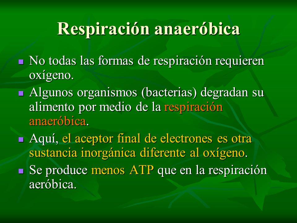Respiración anaeróbica No todas las formas de respiración requieren oxígeno. No todas las formas de respiración requieren oxígeno. Algunos organismos