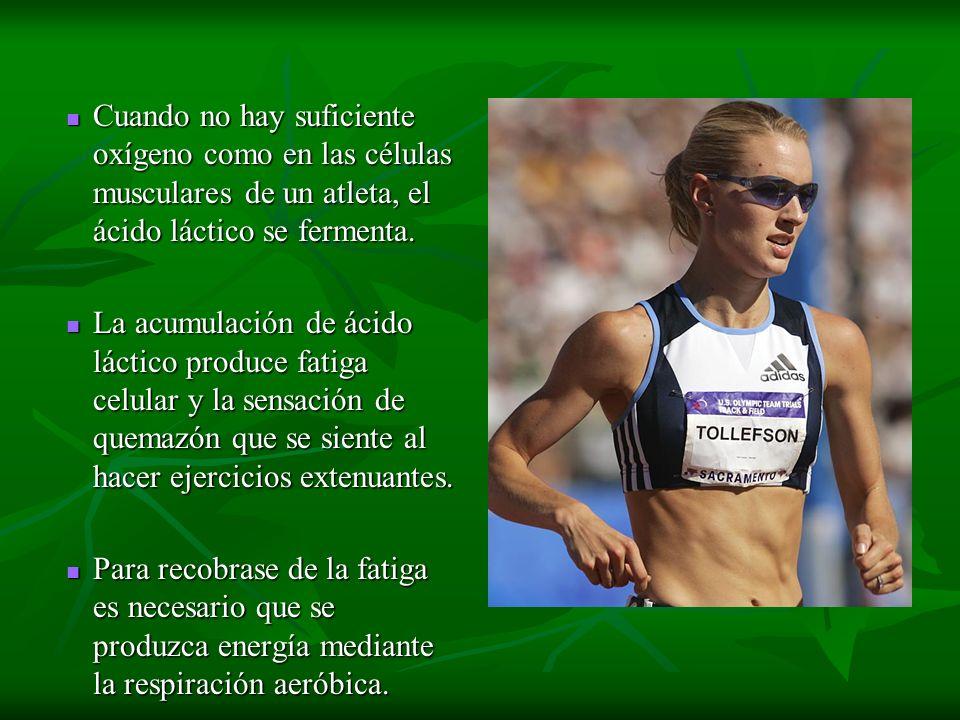 Cuando no hay suficiente oxígeno como en las células musculares de un atleta, el ácido láctico se fermenta. Cuando no hay suficiente oxígeno como en l