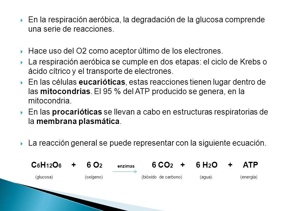 En la respiración aeróbica, la degradación de la glucosa comprende una serie de reacciones. Hace uso del O2 como aceptor último de los electrones. La