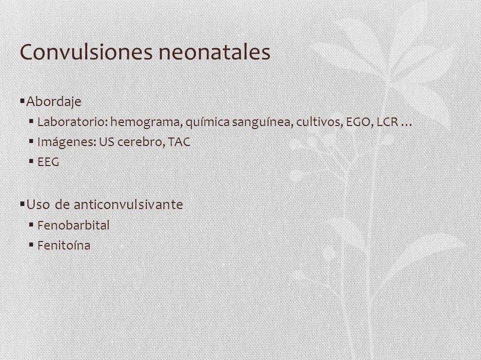 Convulsiones neonatales Abordaje Laboratorio: hemograma, química sanguínea, cultivos, EGO, LCR … Imágenes: US cerebro, TAC EEG Uso de anticonvulsivant
