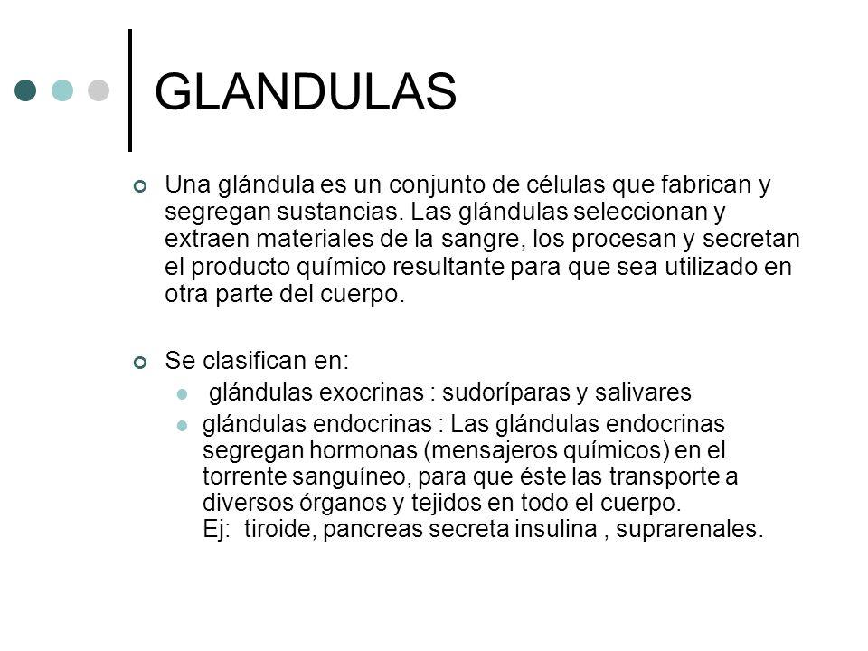 GLANDULAS Una glándula es un conjunto de células que fabrican y segregan sustancias. Las glándulas seleccionan y extraen materiales de la sangre, los