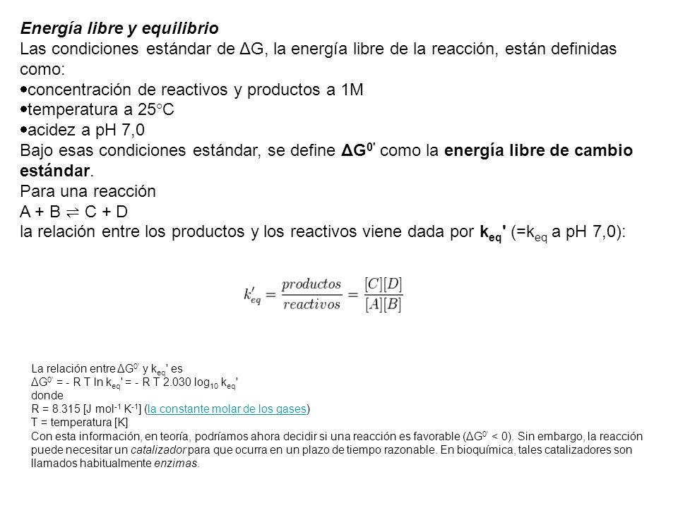 Energía libre y equilibrio Las condiciones estándar de ΔG, la energía libre de la reacción, están definidas como: concentración de reactivos y product