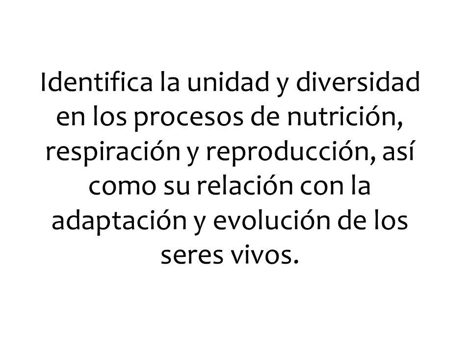 Identifica la unidad y diversidad en los procesos de nutrición, respiración y reproducción, así como su relación con la adaptación y evolución de los