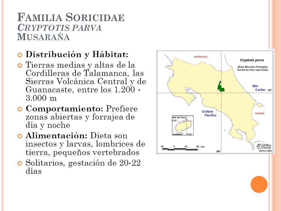 F AMILIA S ORICIDAE C RYPTOTIS PARVA M USARAÑA Distribución y Hábitat: Tierras medias y altas de la Cordilleras de Talamanca, las Sierras Volcánica Ce