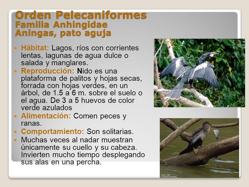 Orden Pelecaniformes Familia Anhingidae Aningas, pato aguja Hábitat: Lagos, ríos con corrientes lentas, lagunas de agua dulce o salada y manglares. Re