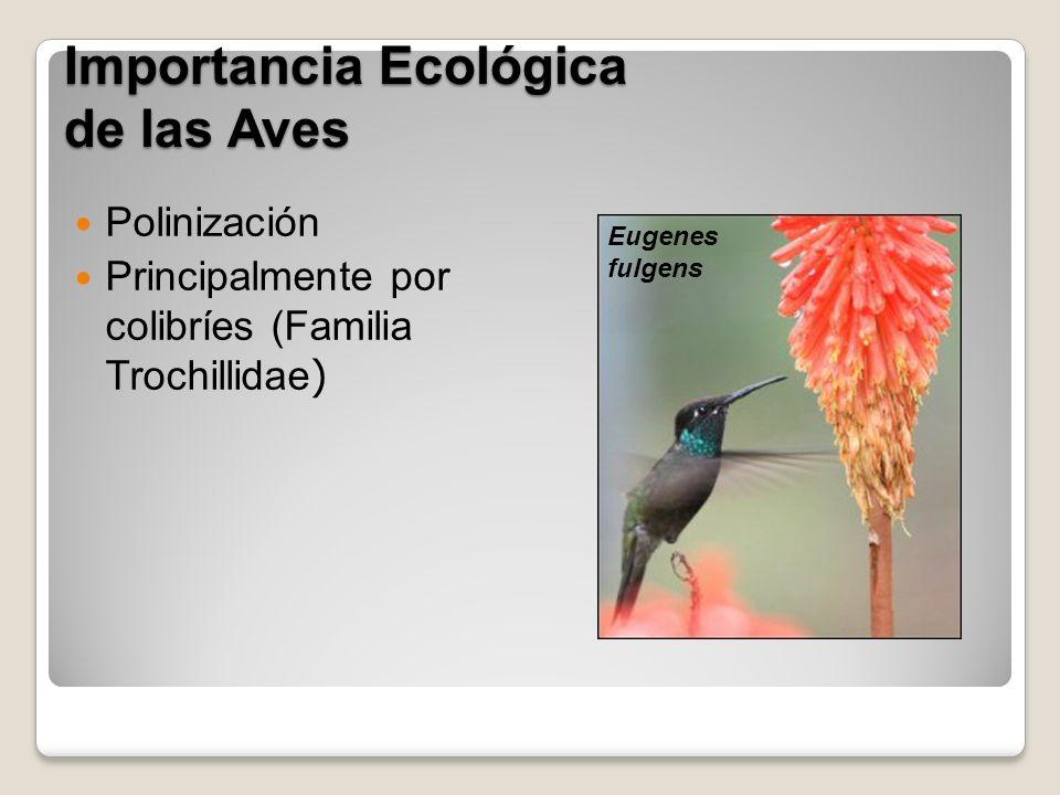 Importancia Ecológica de las Aves Polinización Principalmente por colibríes (Familia Trochillidae ) Eugenes fulgens