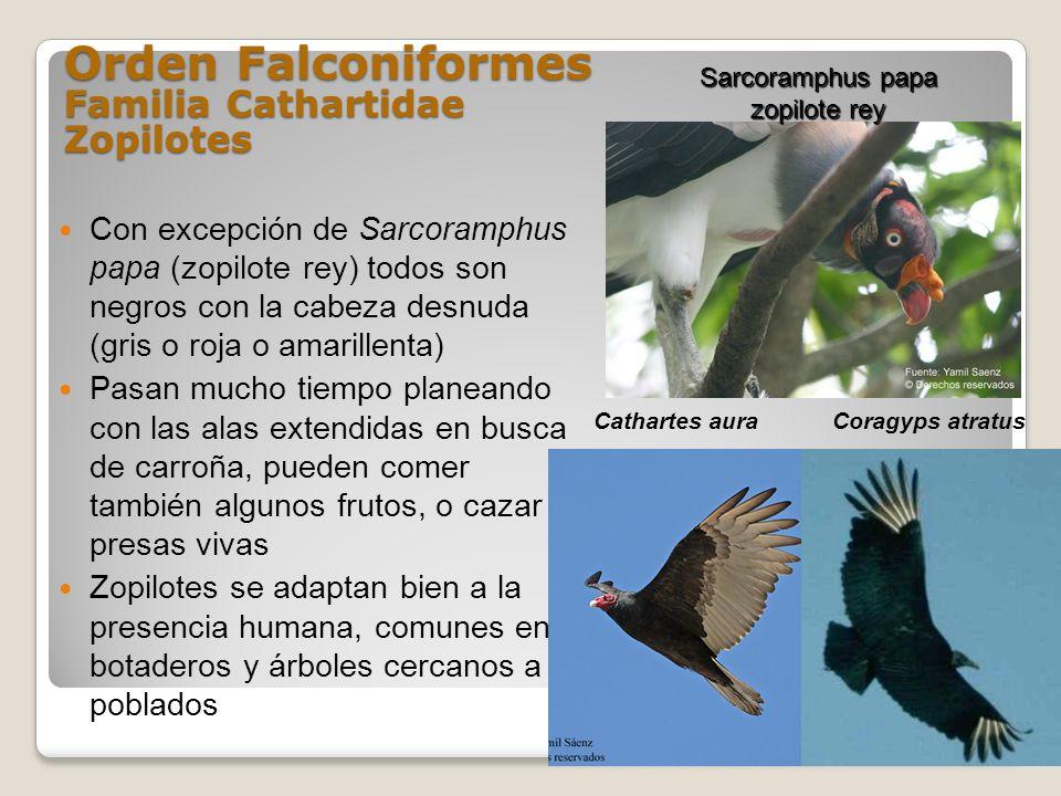 Rewilding Parque Pleistoceno En Sudamérica Es Posible Página