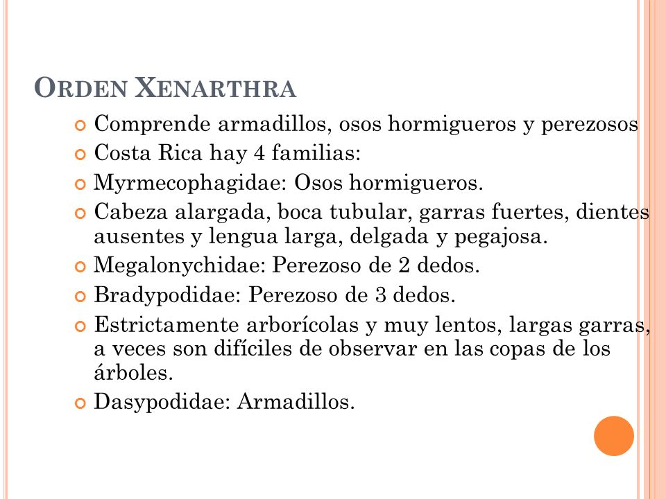 O RDEN X ENARTHRA Comprende armadillos, osos hormigueros y perezosos Costa Rica hay 4 familias: Myrmecophagidae: Osos hormigueros. Cabeza alargada, bo